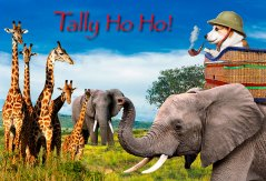 Further Adventure of Jolly Rolly: on safari in Africa!