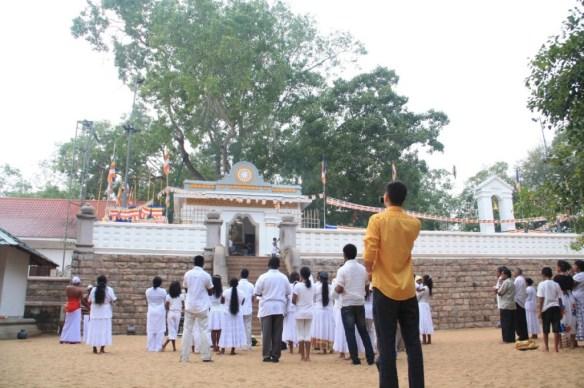 Photographing the Bodhi tree while Sri Lankans pray around me.