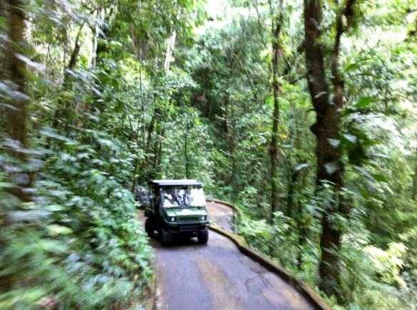 Speeding through the jungle like in Jurassic Park.