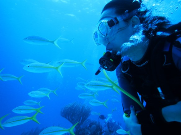 Christina became one with the yellowtail snappers.