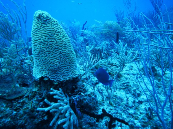 There were many kinds of coral formations, like this smurf hat coral.