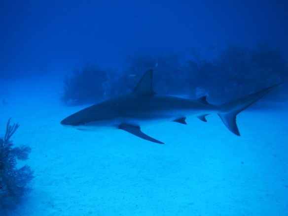 The reef sharks were getting pretty close…