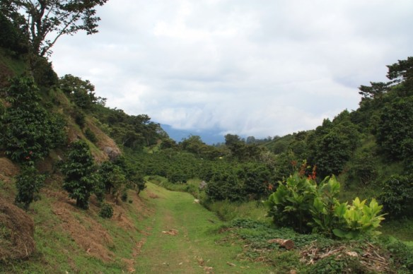 Hiking into the mountains at the Finca Lerida estate!
