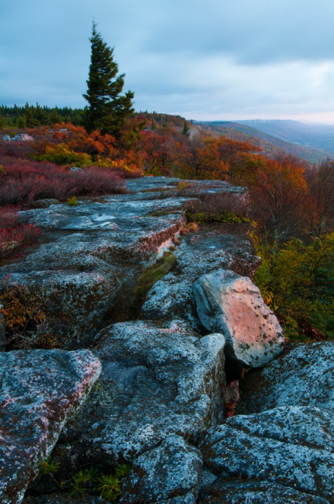 Autumn atop Dolly Sods