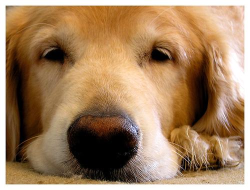 dog-tired.jpg