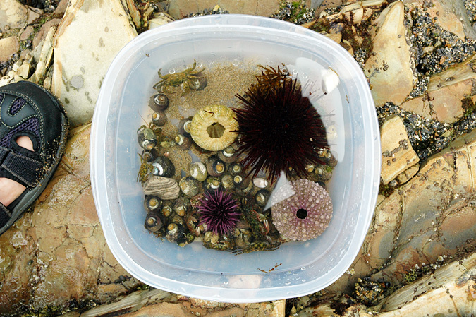 Abalone Cove tidepools collection bin