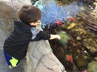 Cabrillo Marine Aquarium, San Pedro