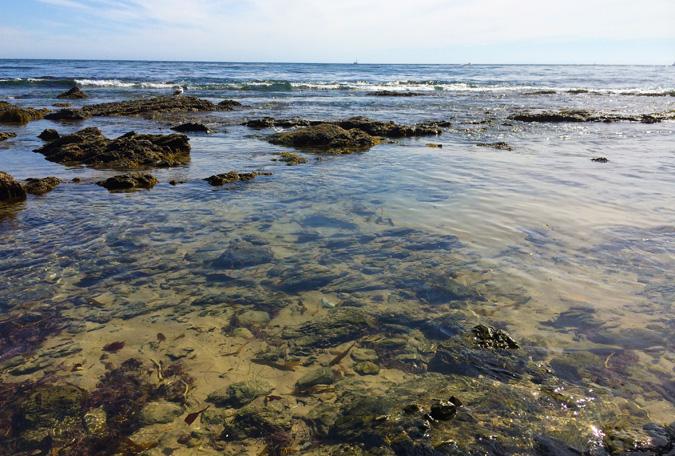 Crystal Cove tide pools