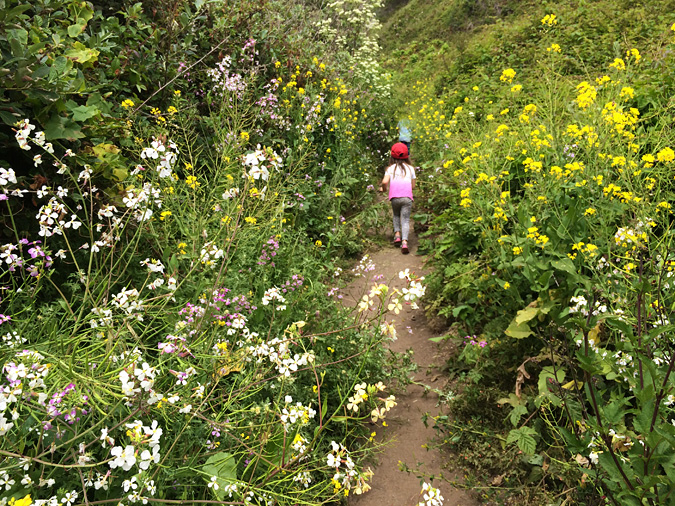 The trail to the beach from the Kirk Creek campground is lined with wild flowers and fennel