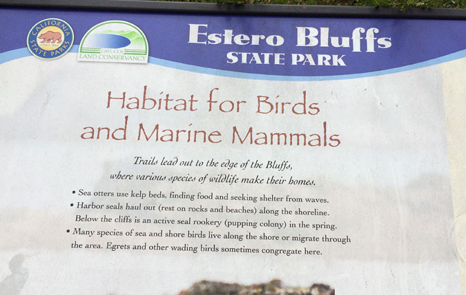 Estero Bluffs State Park is an interesting stop heading to or from Big Sur