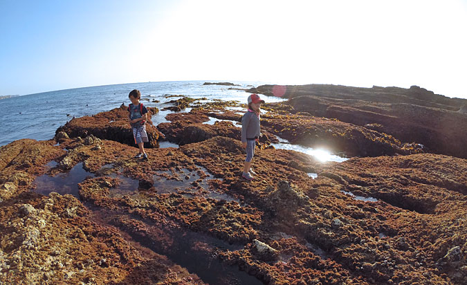 Exploring the Goff Island tide pools