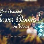 The Most Beautiful Flower Blooms in Winter : Vic Barnes