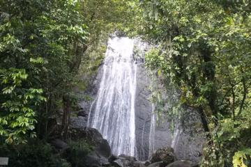 El Yunque National Forest: The Rebirth of a Rainforest