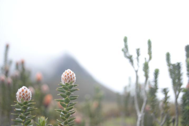Flora del altura, Quito