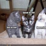funny-pictures-kittens-see-speak-and-understand-no-evil