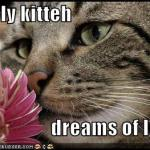funny-pictures-lonely-cat-dreams-of-love