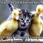 funny-pictures-kitten-does-not-want-to-swim