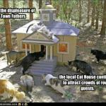 funny-pictures-cats-have-a-house