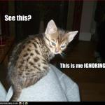 funny-pictures-kitten-ignores-you