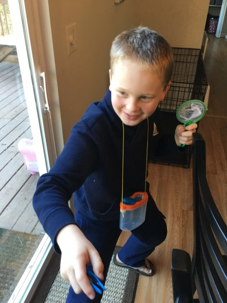 Garden: Bug Catching