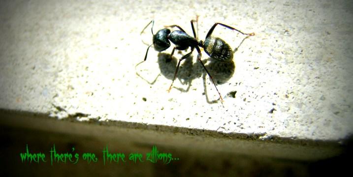 Ants Pismire College kids