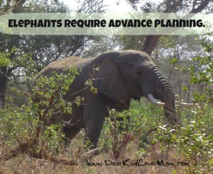 elephants require advance planning