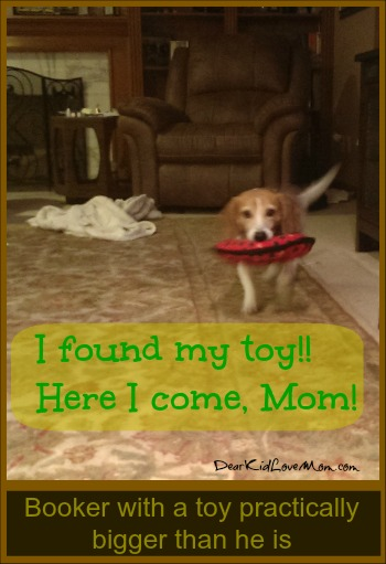 Puppy Teaches Me to Throw Toys  DearKidLoveMom.com