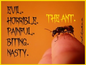 Evil. Horrible.Awful.Painful. Biting. Nasty. Ants. We are now at war. DearKidLoveMom.com