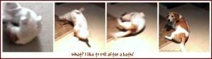 Puppy rolls around after a bath. DearKidLoveMom.com