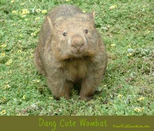 Dang cute wombat. DearKidLoveMom.com