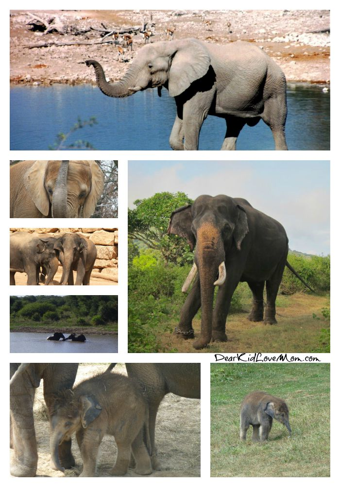 Happy Elephant Appreciation Day! Take a moment to appreciate your favorite elephant. DearKidLoveMom.com