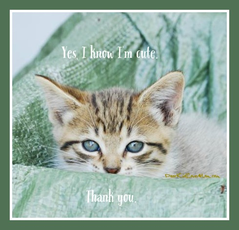 Kitten Observations. Yes, I know I'm cute. Thank you. DearKidLoveMom.com