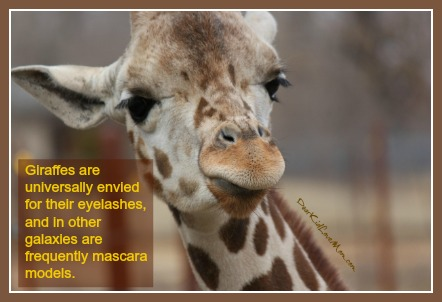 Giraffes are universally envied for their eyelashes, and in other galaxies are frequently mascara models. DearKidLoveMom.com