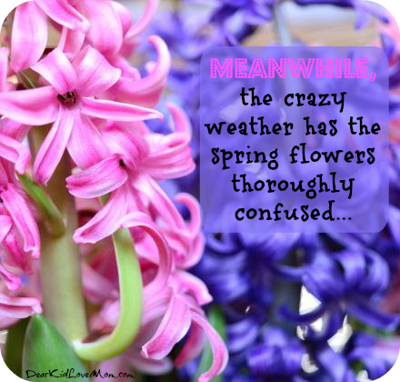 Meanwhile, the crazy weather has the spring flowers thoroughly confused. DearKidLoveMom.com