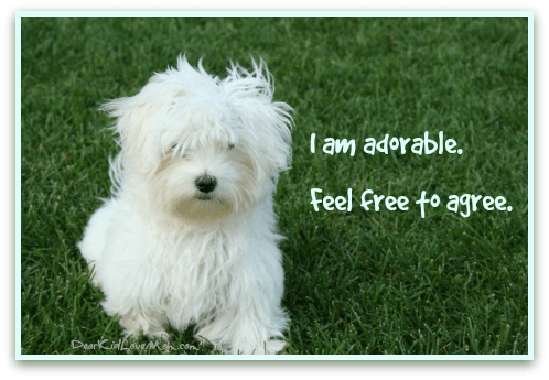Puppy: I look gorgeous. DearKidLoveMom.com/PuppyConversations