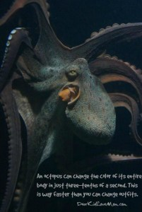 An octopus can change the color of its entire body in just three-tenths of a second. This is way faster than you can change outfits. DearKidLoveMom.com