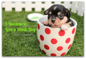 5 Reasons to Love a Small Dog. DearKidLoveMom.com