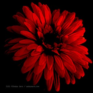 Orange-Flower-drk-DB-2015-2