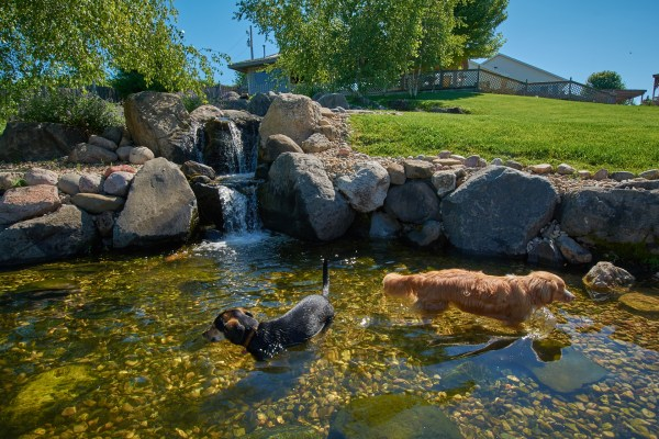 Dogs in the pond The Dogwoods Mt Horeb WI