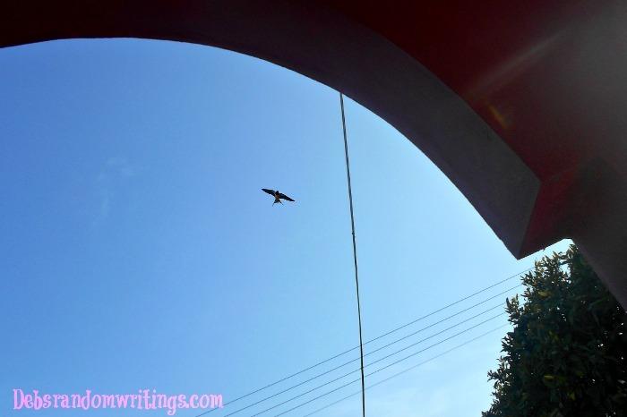 Lucky swallow shot