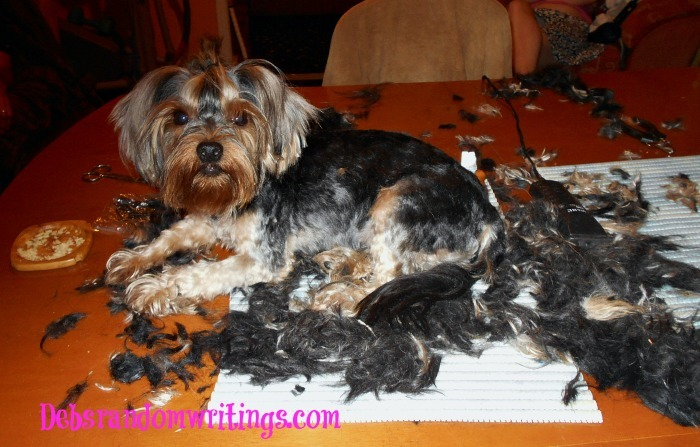 Dog Grooming For Summer...