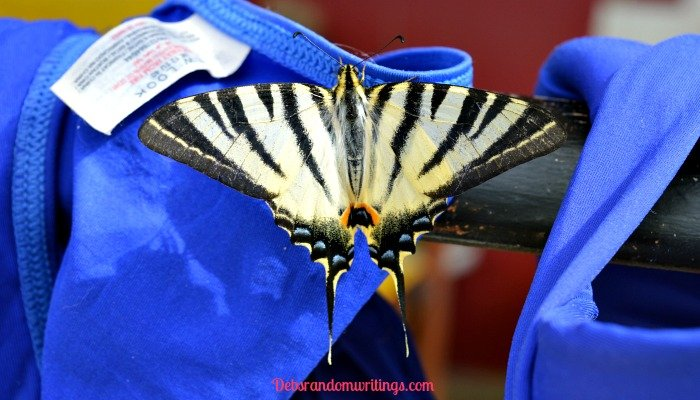 A Rather Handsome Looking Swallowtail Butterfly