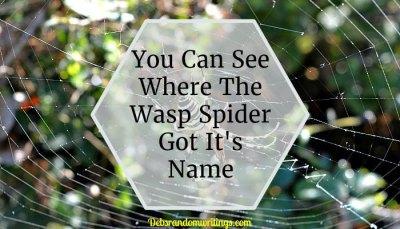 A Wasp Spider