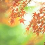 紅葉はなぜ緑の葉っぱが黄や赤になるの?メカニズムは最低気温が影響?