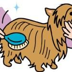 【ペット】愛犬の病気対策にも!簡単ブラッシング日常のお手入れ!