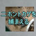 多摩川近辺でトカゲを捕まえる飼いだすとコオロギが鳴きだす季節に関係なく始まる音色が好きだ