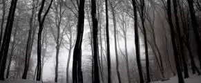 forest-bw