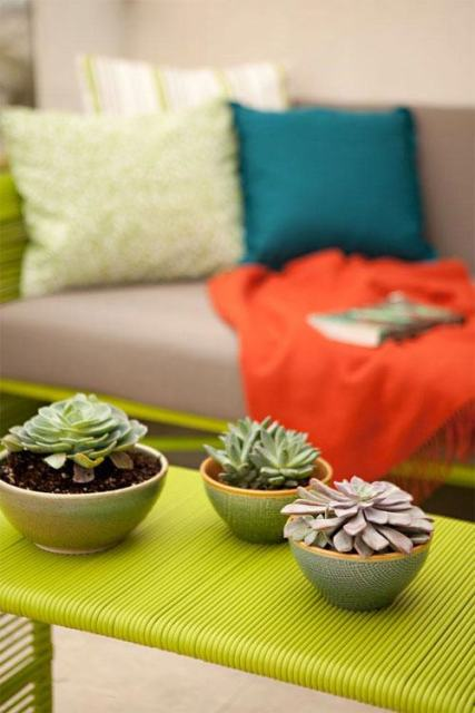 rincones-encanto-plantas-crasas-suculentas-casa