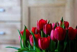 Cómo Decorar tu Casa con Flores en San Valentín