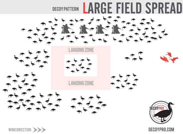 Large Goose Decoy Spread for Fields